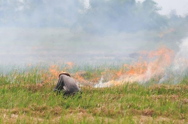 crop burning thailand pollution