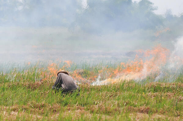 crop burning thailand pollution